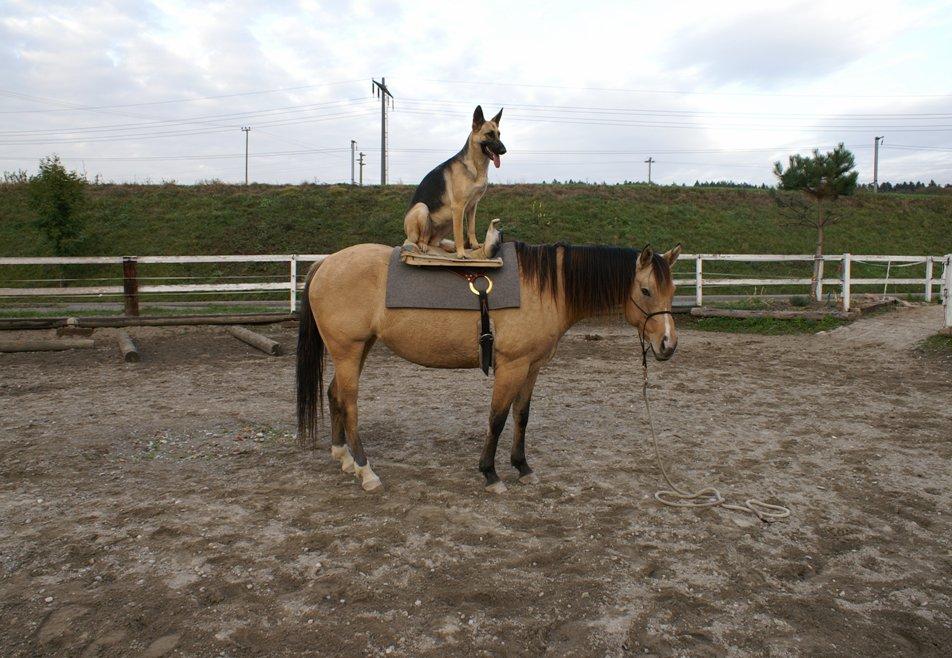 Partnersuche mit hund und pferd [PUNIQRANDLINE-(au-dating-names.txt) 45